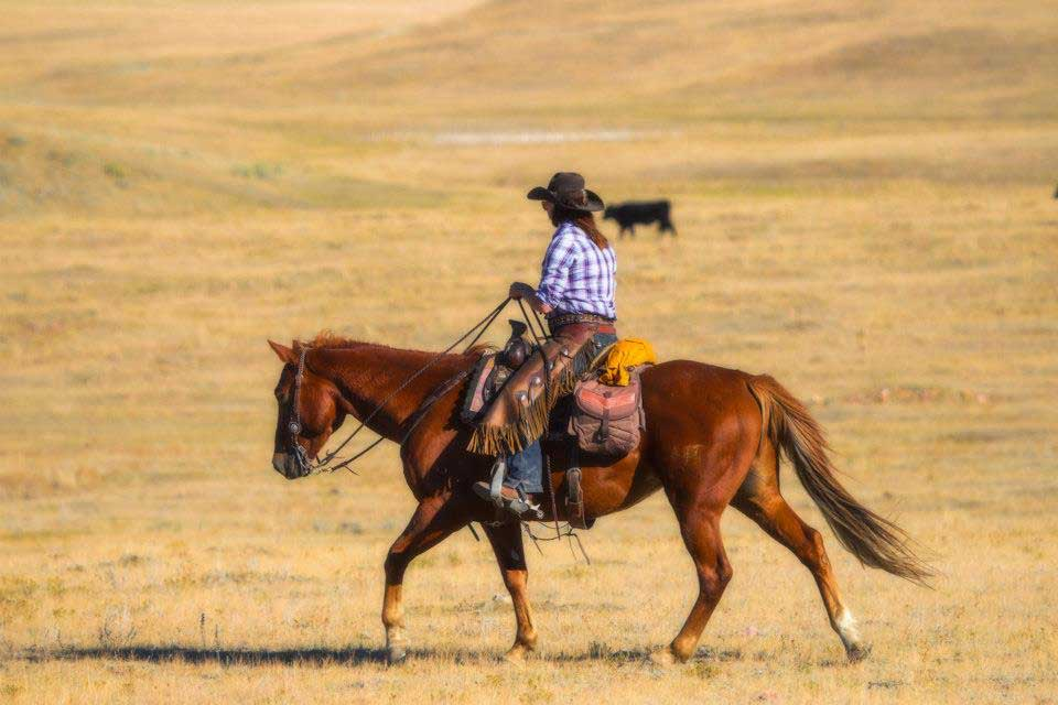 Western Cattle Drives